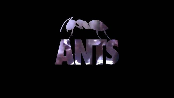 ANTS giochi per iphone avrmagazine